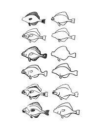 Variations of a flounder (2015)